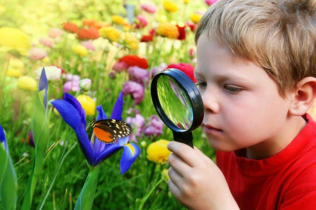 Формирование экологических представлений