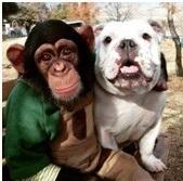 Обезьяна с собакой