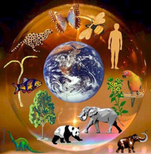 Экологическое экспериментирование