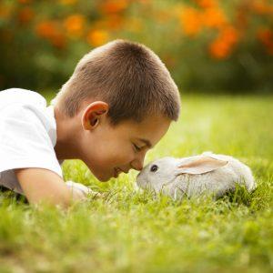 Ребенок и заяц на траве