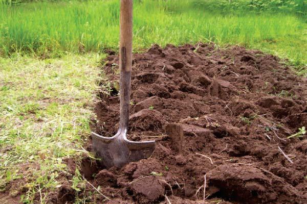 Подготовка почвы к посеву зерна