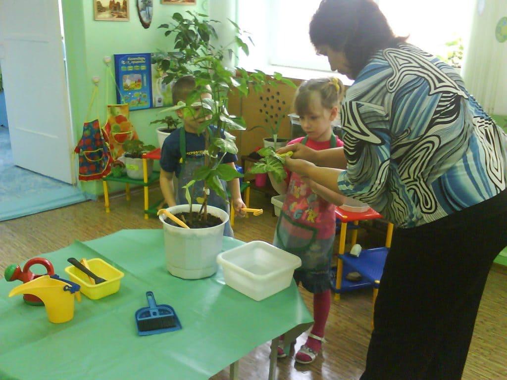 Экологические представления дошкольников