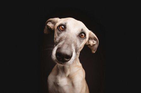 Верный пес
