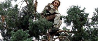 Мужик на дереве