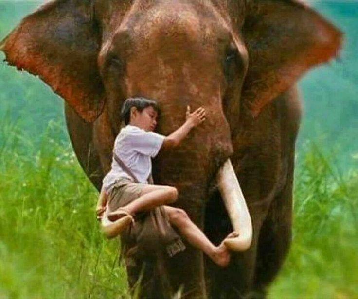 Слон и мальчик