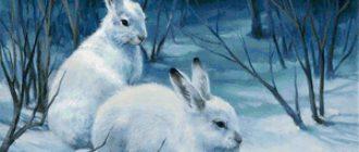Зайцы зимой